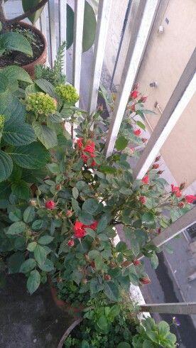Una miriade di piccoli boccioli di rosa