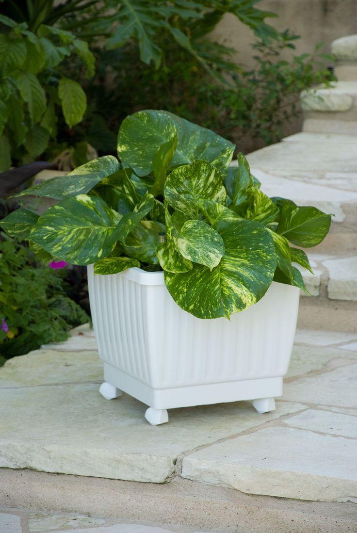 85 best self watering images on pinterest self watering outdoor