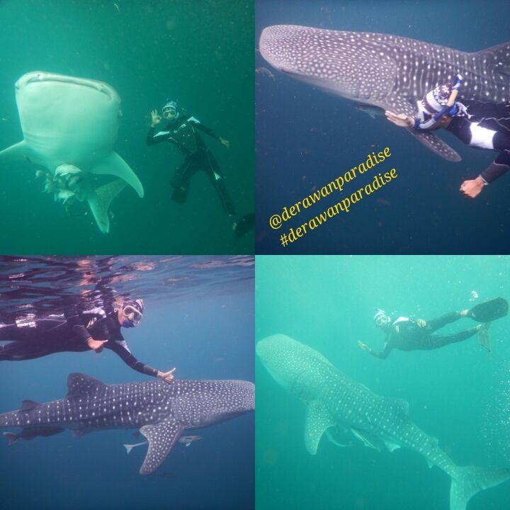 DERAWAN PARADISE TOUR: Paket Tour Derawan 4 Hari 3 Malam + Hunting Whale Shark