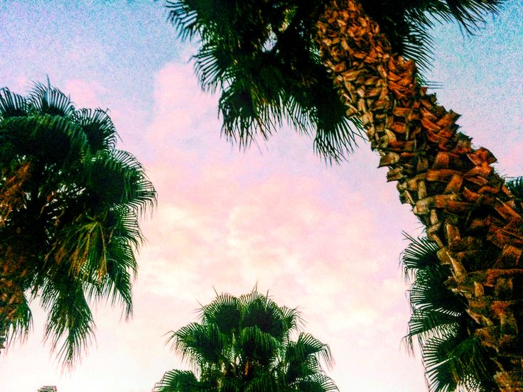 #palmtrees #clouds #heaven