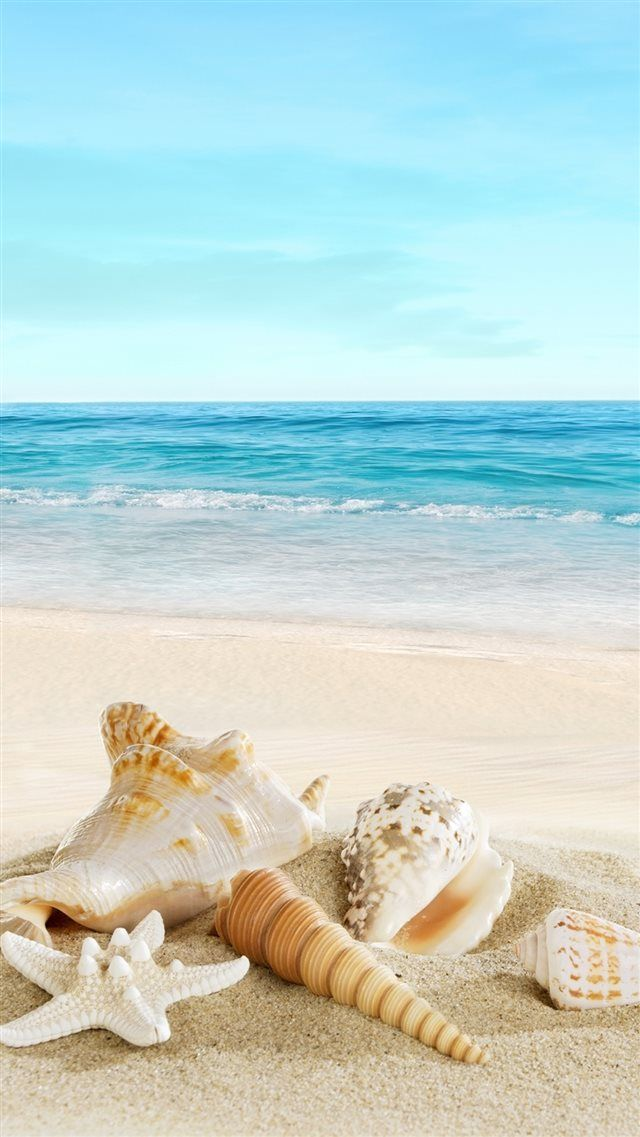 Nature Sunny Sea Shell Beach Iphone 8 Wallpaper Download