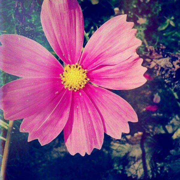 Flower Fashion Pinterest