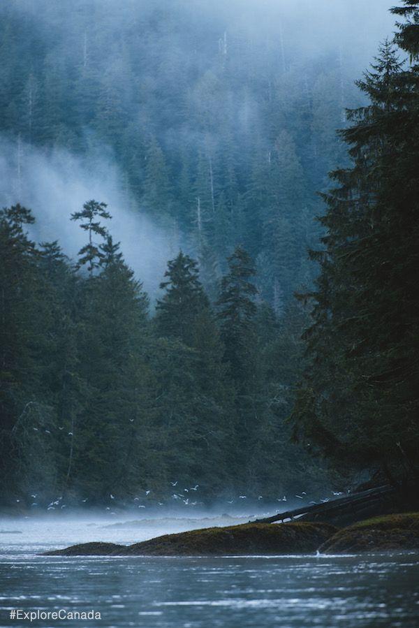 There's magic in the air at Great Bear Rainforest in British Columbia, Canada | @explorecanada