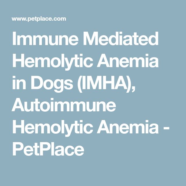 Immune Mediated Hemolytic Anemia in Dogs (IMHA), Autoimmune Hemolytic Anemia - PetPlace