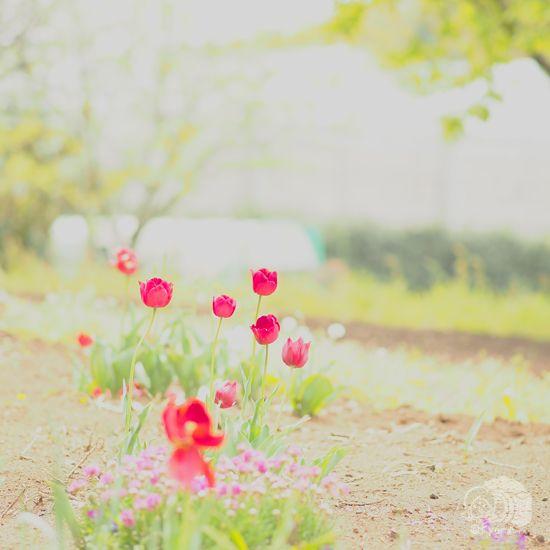 ちいさい春みつけた。: カメラ女子「きょん♪」の簡単ステキ写真術