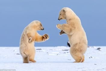 Daily Brain Teasers, Riddles and Jokes: Dancing Bears