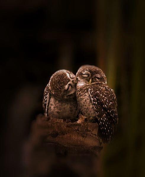 kiss hoot