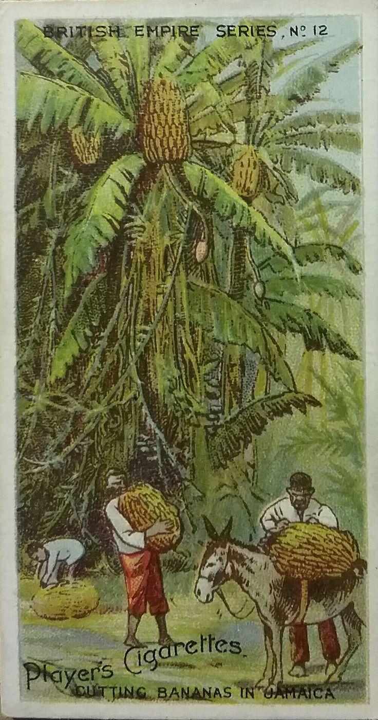 Pin on Vintage Banana Graphics
