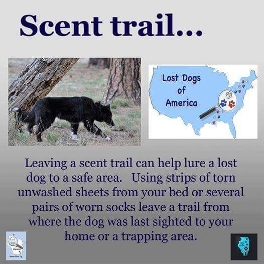 19 best TIPS ON HOW TO FIND A LOST DOG images on Pinterest Find - lost dog flyer examples