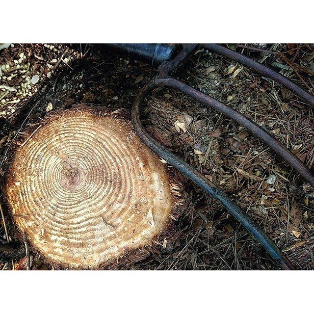 【theforestree_botanical_life】さんのInstagramをピンしています。 《Conpass of my life. #theforestree #intothewild #stump #intheforest #gardening #jardin #jardins #botanicallife #botanical #ガーデニング #ナチュラルガーデン #オープンガーデン #植物との暮らし #森 #山 #木こり #切り株 #年輪 #庭仕事 #素敵 #丁寧に暮らす #暮らし #ボタニカルライフ #ボタニカルライフの提案 #マルシェ #蚤の市》