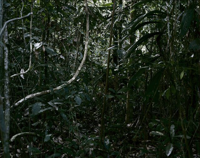 Thomas Struth | Paradise 32, Rio Madre de Dios, Peru (2005), Available for Sale | Artsy