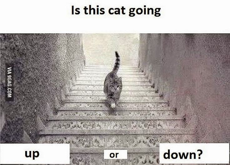 Can you figure out whether this cat is going up or down these stairs? | TeluuDailies