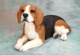 Tricolour Beagle so cute