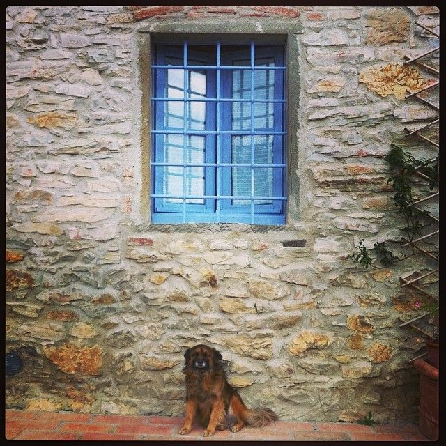 Billy under blue window