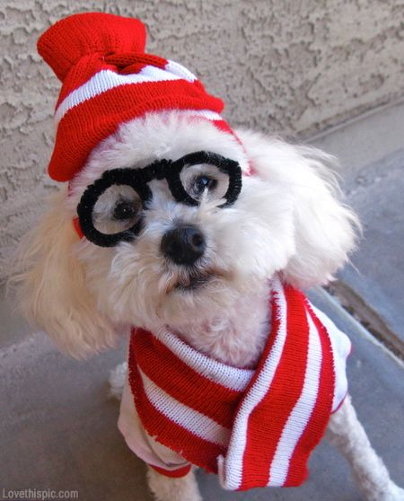 wheres waldo costume cute animals halloween crafts diy costumes costume ideas dog costumes pet costume ideas - Halloween Costume For Small Dogs