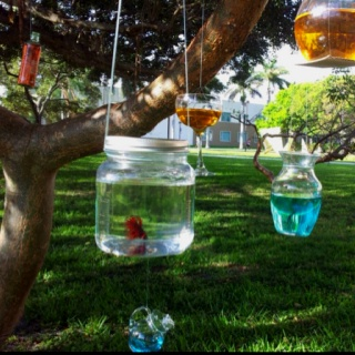 16 best images about betta fish ideas on pinterest vase for Betta fish decor