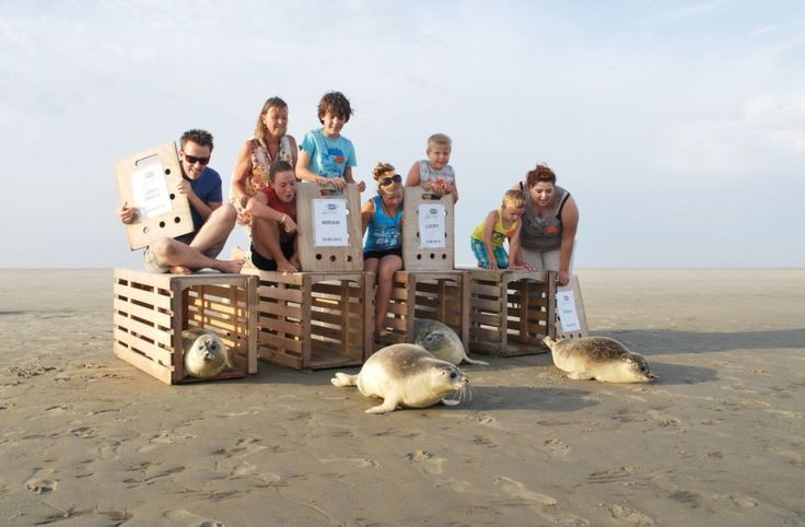 Zeehondencreche, Lauwersoog Water Events, zeehonden vrijlaten
