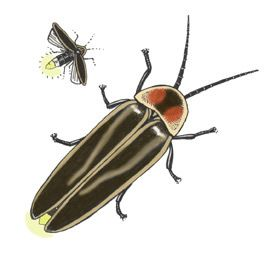 details and illustrations of the insect orders