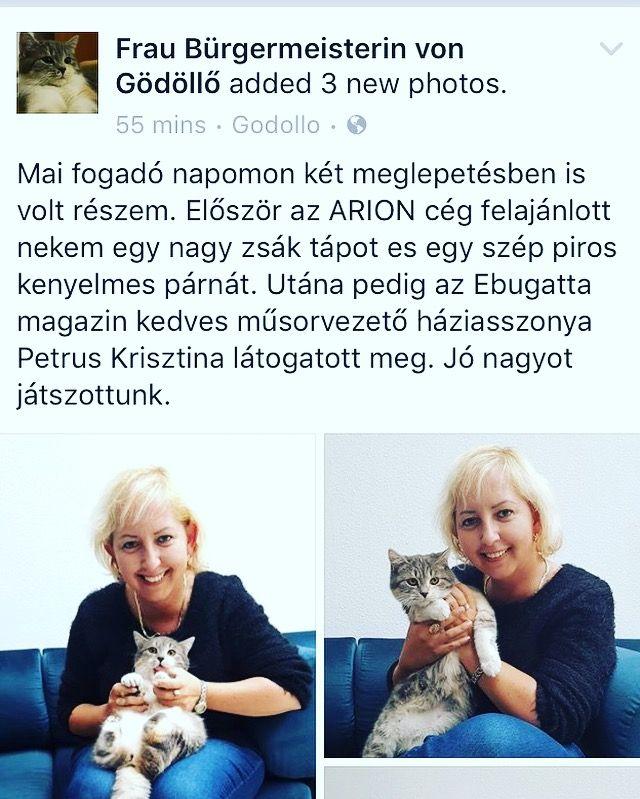#cat #cica #ebugattakriszti