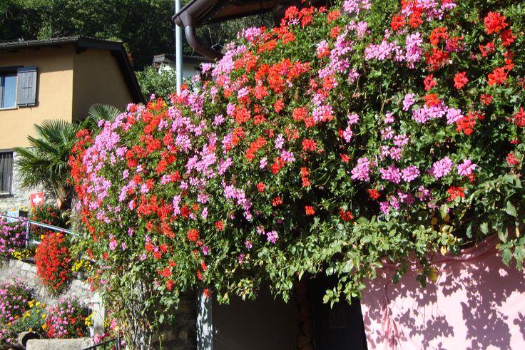 Maravilloso rincòn de Vellano, en Ticino, Suiza, situado en alta montaña.