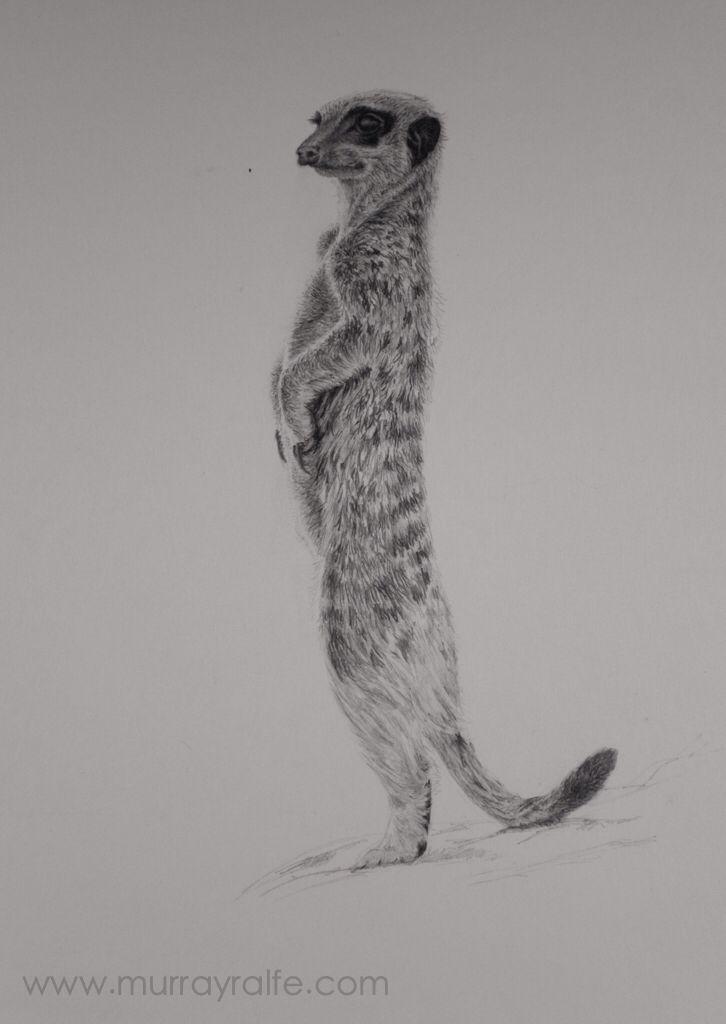 Simple meerkat drawing