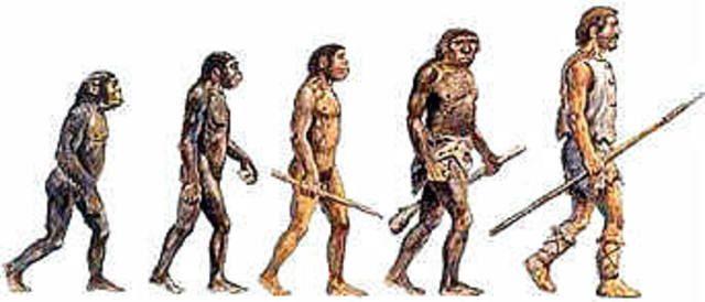 Los homínidos o primeros humanos son una de las dos familias de monos en que se dividió el grupo de los primates. Mientras que en la familia del orangután, del gorila y del chimpancé no hubo cambios, hace 15 millones de años en la familia de los homínidos comenzó la evolución hasta el hombre actual.