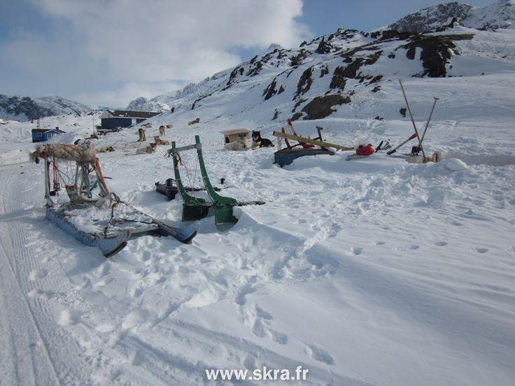 Chiens arctiques se reposant sur leurs traineaux à Sisimiut, Groenland