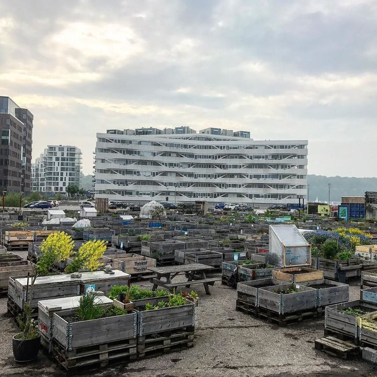 Urban gardening facing new architectural buildings. I hope the gardens will remain to share some nature love #mitaarhus #urbangarden