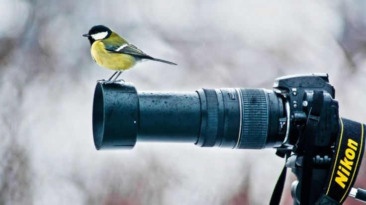 Concurs Foto Galben