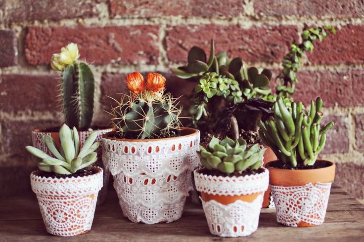 Lace pots with cactus