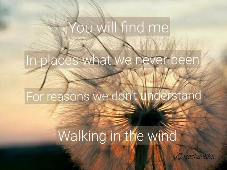 One Direction - Walking In the Wind//Lyrics