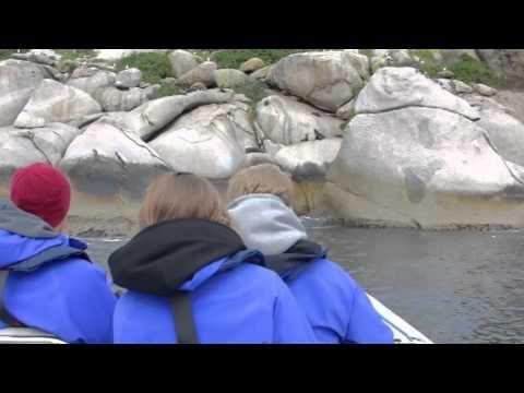 Big duck boat tours - victor harbor