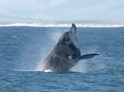 Come and explore Hermanus with Where2Stay-SouthAfrica.