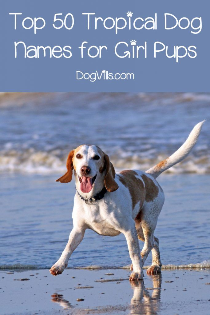 100 Tropical Dog Names For Male Female Pups Dog Names Best