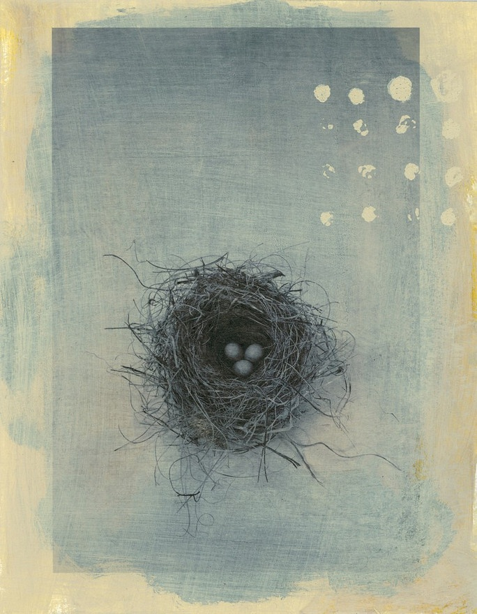 Elena Ray ... Black Throated Sparrows nest. Photo based mixed medium image.