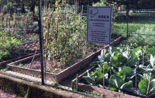 I piccoli appezzamenti coltivati dai pensionati lungo il Canale di Secchia nel mirino di ladri e vandali