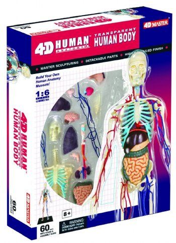 28 best Human Anatomy/Learning Tools! images on Pinterest | Human ...