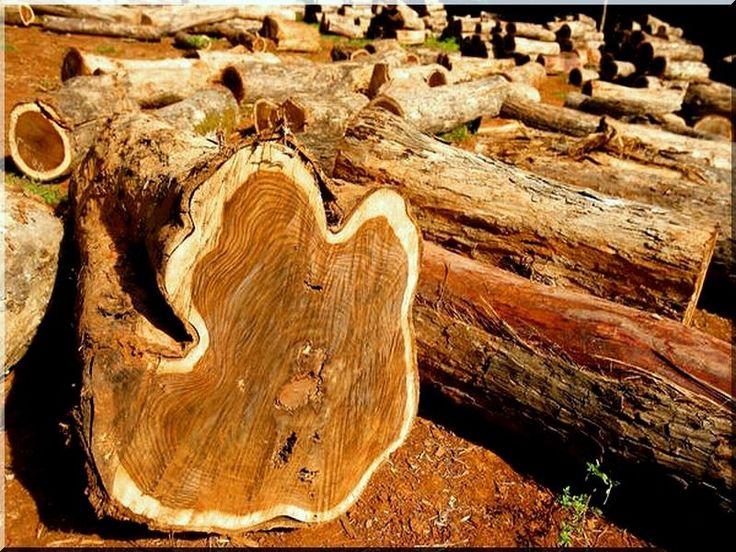Keményfa rönkök