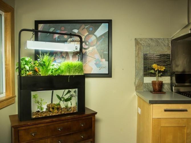 Aquaponic Garden Gives New Life To An Aquarium