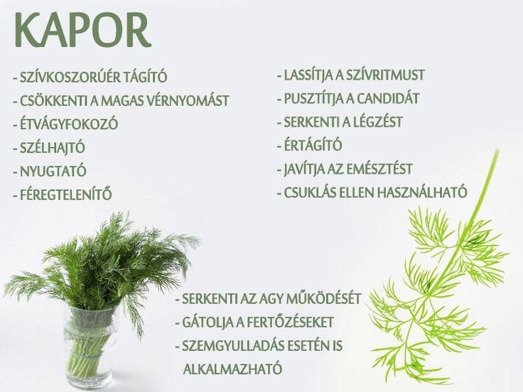 Kapor | Socialhealth