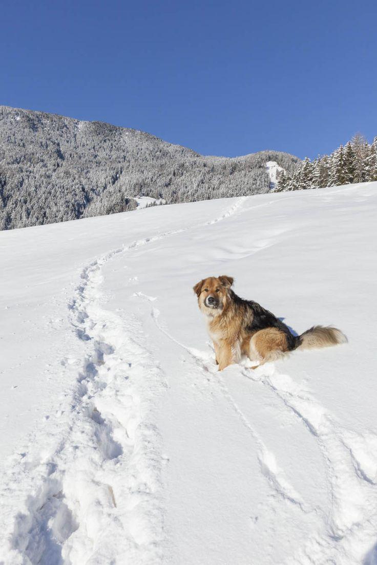 Winter am Südtiroler Bauernhof - Roter Hahn