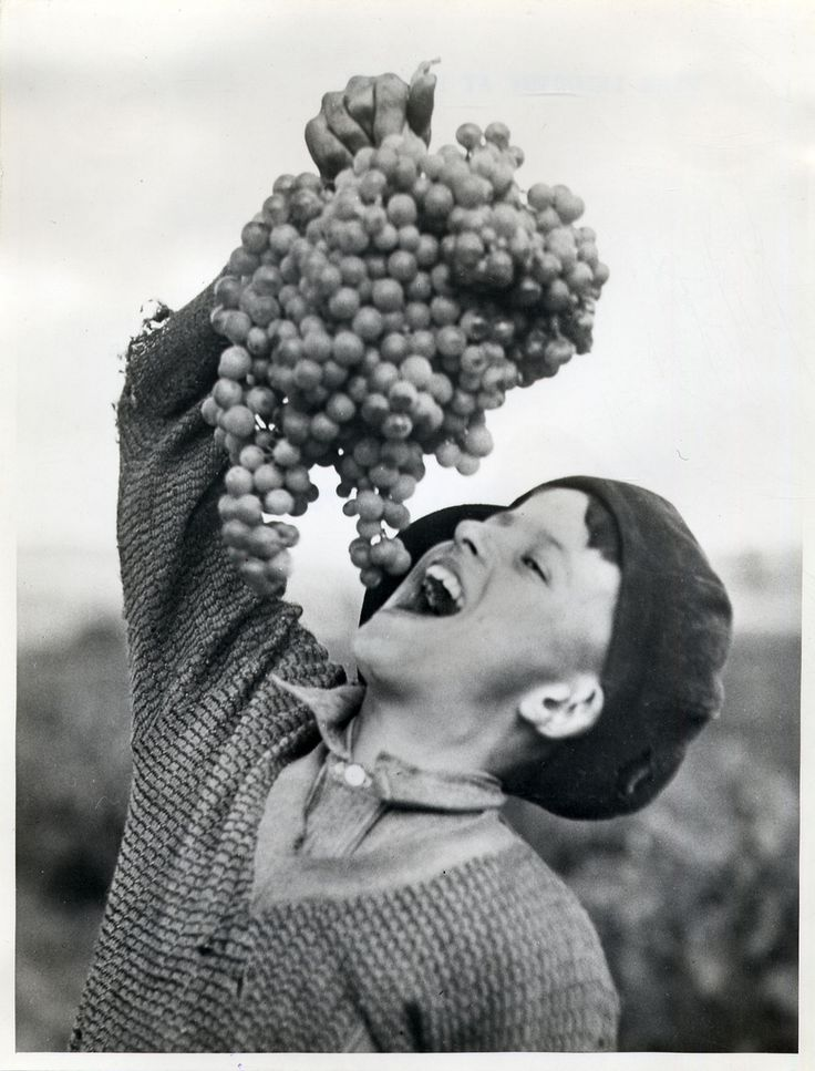Boy with grapes at Lyndoch, Barossa Valley. c1940 The Valley's great wineries…