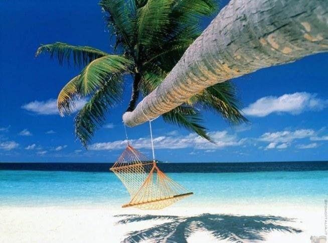 Bora Bora #travel #beach #sea #palm #bora bora