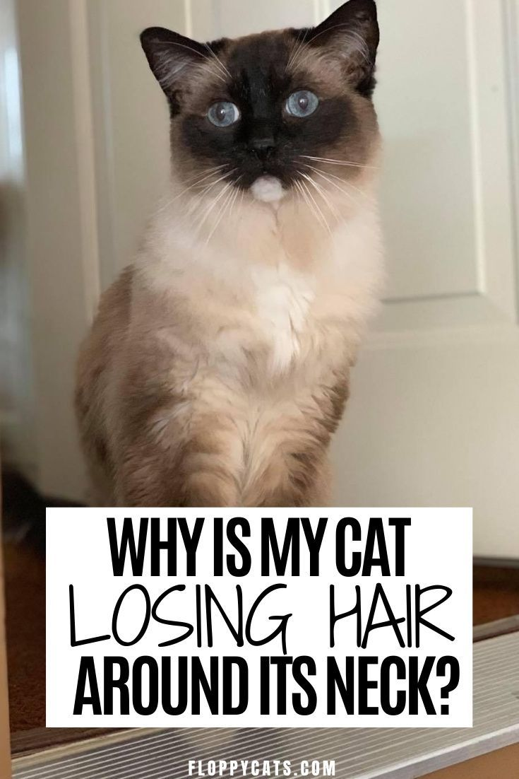Causes Of Hair Loss In Cats South Salem Animal Hospital