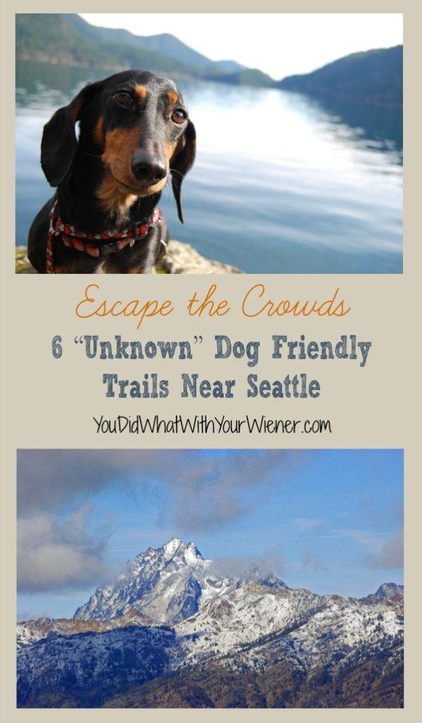 6 Unknown Dog Friendly Trails Near Seattle