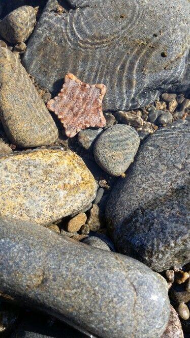 Starfish at Primrose
