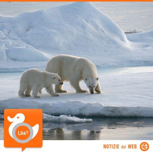 UN PO' DI ARTICO, GRAZIE!  C'è fermento tra i paesi che se lo contendono... perché? Bè, perché l'Artico è una zona ricchissima di risorse naturali. Riusciranno Canada, Russia, Norvegia, USA, Danimarca e Islanda a trovare un accordo?!  http://www.gizmodo.it/2013/07/16/il-taglio-della-torta-artica.html