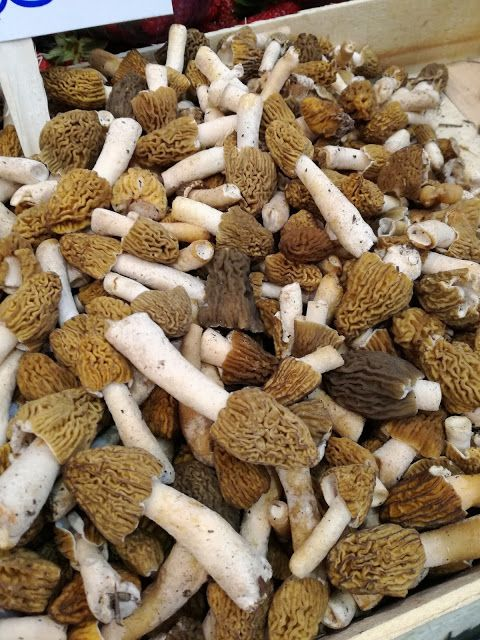 Giglio Cooking School: Something of the Season: Morel Mushrooms