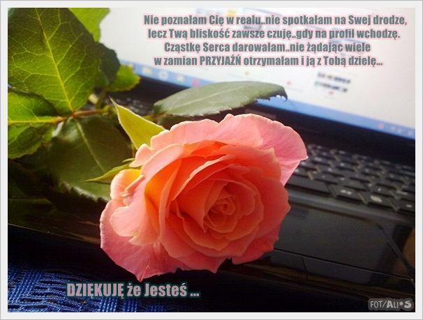 WiTaM11jp_wsspswp.jpg (606×459)
