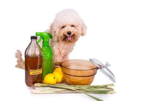 How to Make Homemade Flea Shampoo for Dogs - Top Dog Tips                                                                                                                                                                                 More